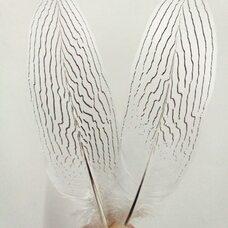 Перья серебряного фазана 24-29 см. 1 шт.