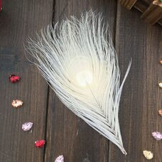 Перья павлина - Павлиний глаз 12-16 см. Белого цвета