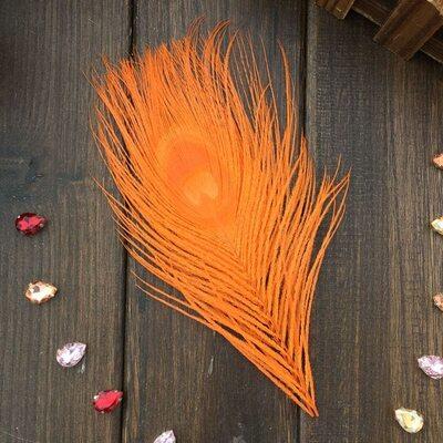 Перья павлина - Павлиний глаз 12-16 см. Оранжевого цвета