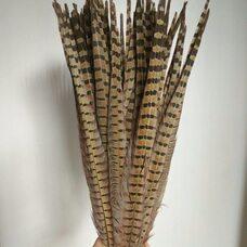 Перья фазана 45-50 см. Натуральный цвет