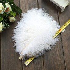 Перья страуса 25-30 см. Белый цвет