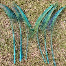 Перо павлина меч 30-35 см. 1 шт. Голубые