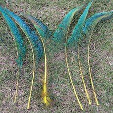 Перо павлина меч 30-35 см. 1 шт. Желтые