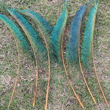 Перо павлина меч 30-35 см. 1 шт. Оранжевые