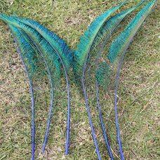 Перо павлина меч 30-35 см. 1 шт. Синего цвета
