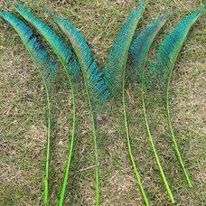 Перо павлина меч 30-35 см. 1 шт. Салатовые