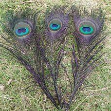 Перья павлина 25-32 см. 1 шт. Черные