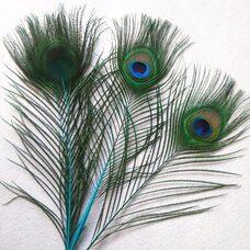 Перья павлина 25-32 см. 1 шт. Голубые