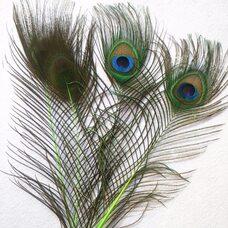 Перья павлина 25-32 см. 1 шт. Салатовые