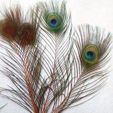 Перья павлина 25-32 см. 1 шт. Оранжевые