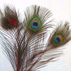 Перья павлина 25-32 см. 1 шт. Красные