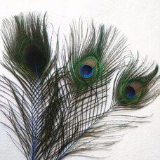 Перья павлина 25-32 см. 1 шт. Синего цвета
