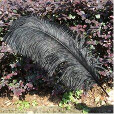 Премиум перья страуса 55-60 см. Черный цвет