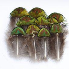 Золотые перья павлина 4-7 см. 10 шт