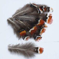 Перья фазана 5-7 см. 10 шт.