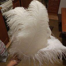 Премиум перья страуса 50-55 см. Белый цвет