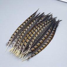 Перья алмазного фазана 23-28 см. 1 шт. Натуральный цвет