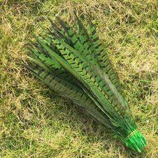 Перья фазана 30-35 см. Салатовые