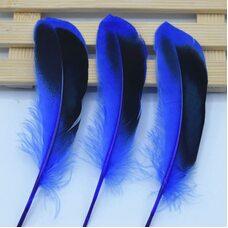 Перья утки 10-15 см. с отливом 10 шт. Синего цвета