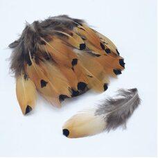 Перья фазана 6-10 см. 20 шт. Натуральный цвет
