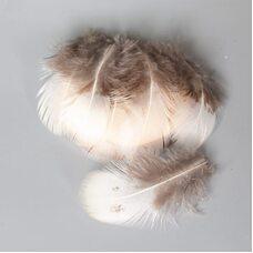Декоративные перья фазана 6-7 см. 10 шт.