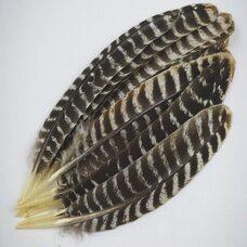 Перья индейки из крыла 25-30 см. 1 шт.