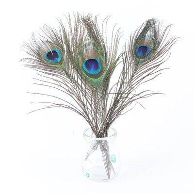 Перья павлина 25-30 см. Натуральный цвет