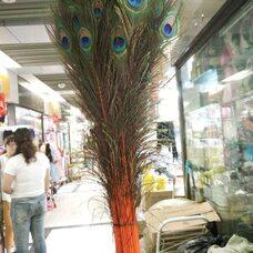 Перья павлина 70-80 см. Оранжевый цвет