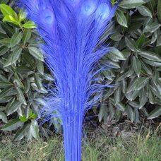 Цветные перья павлина 70-80 см. Синий цвет