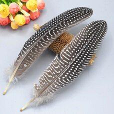 Перья цесарки 17-22 см. 10 шт. Натуральный цвет